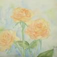 278 '09薔薇-その後のその後-