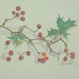 16 サルトリイバラとひいらぎの葉