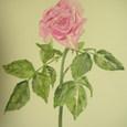 183 薔薇…その後