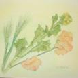 55 麦の穂・菜の花・スイトピー