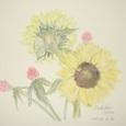 73 向日葵といちご草