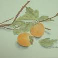 8 枝つきの柿