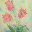 271 Tulip^^