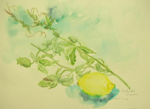 160 レモンと時計草