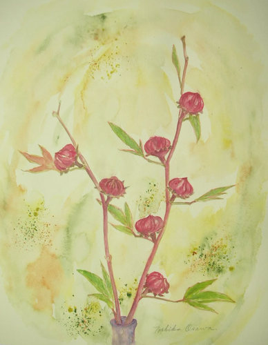 254 木立葵の実