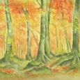 71 紅葉の白神山地・ブナ原生林