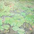 108 花鳥園の睡蓮池